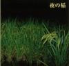 夜の稲.jpg